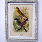 Oprawiona litografia – ptaki #2