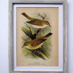 Oprawiona litografia – ptaki #3