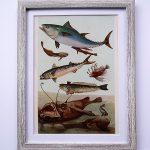 Oprawiona stara rycina – ryby #4