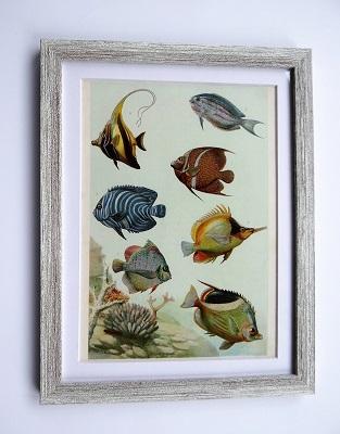 Oprawiona stara rycina – ryby #5