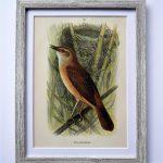 Oprawiona litografia – ptaki #1