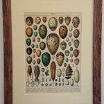 Stara litografia – Jaja