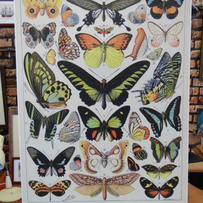 Obraz na płótnie – motyle